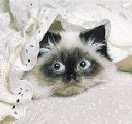 CAT_DIED_3c