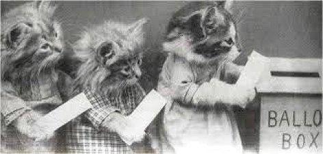 animals-1920