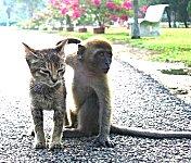 animals-0571-150