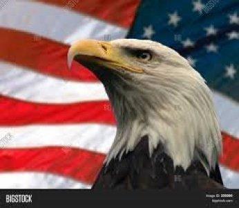American Eagle 01 300