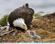 American Eagle 04 150