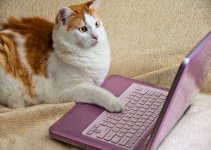 Cat on Internet 150.jpg