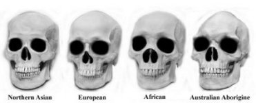 Skulls with Races 150