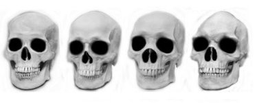 Skulls without Races 150