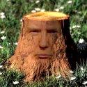 Dumb as a Trump 125